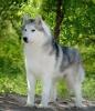Leelou59890 - éleveur canin Dogzer