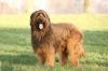 tilou10 - éleveur canin Dogzer