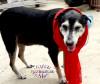 REALDOGLOVER - éleveur canin Dogzer