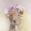 BladeToYourWrist - éleveur canin Dogzer
