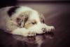 Marlene27290 - éleveur canin Dogzer