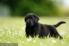 claire.dupont75 - éleveur canin Dogzer