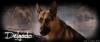 XxXL0L1P0SXxX - éleveur canin Dogzer