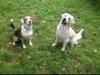 flodu5966 - éleveur canin Dogzer
