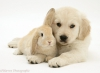 Chamollow_Cute - éleveur canin Dogzer