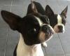 Evilyssandre - éleveur canin Dogzer