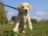 blablabla445 - éleveur canin Dogzer