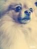 Eloelo27560 - éleveur canin Dogzer