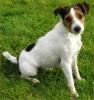 belle322 - éleveur canin Dogzer