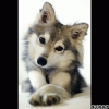 Evana407 - éleveur canin Dogzer