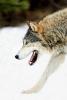Imankines - éleveur canin Dogzer