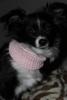 hitz4isi - éleveur canin Dogzer