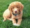 lilouchevaline - éleveur canin Dogzer