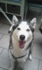 eleana2004 - éleveur canin Dogzer