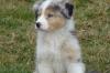 ver1912 - éleveur canin Dogzer