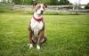 Garden222 - éleveur canin Dogzer