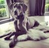 loloprupru - éleveur canin Dogzer