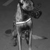 Lex66 - éleveur canin Dogzer
