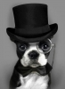 chipiedog44 - éleveur canin Dogzer
