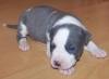 cimicimi - éleveur canin Dogzer