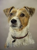 loloe13 - éleveur canin Dogzer