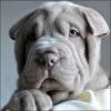 Chamallow22 - éleveur canin Dogzer