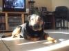 psg27 - éleveur canin Dogzer