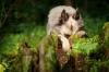 Magnificence - éleveur canin Dogzer