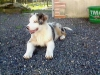ORDRE - éleveur canin Dogzer