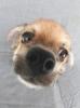 gabrielle1325 - éleveur canin Dogzer