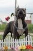 leboss3 - éleveur canin Dogzer