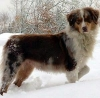 sheena96 - éleveur canin Dogzer