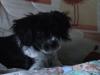 MURIEL.BACO - éleveur canin Dogzer