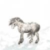 Roussie - éleveur canin Dogzer
