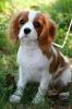sart62 - éleveur canin Dogzer