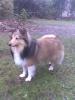 eret - éleveur canin Dogzer