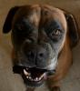 Maureenphoto - éleveur canin Dogzer