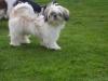 coline32 - éleveur canin Dogzer