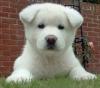 grigrid - éleveur canin Dogzer