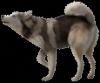 Valkyon07 - éleveur canin Dogzer