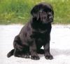 lizy2 - éleveur canin Dogzer