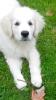 Piinky7 - éleveur canin Dogzer