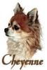 SouvenirCheyenne - éleveur canin Dogzer