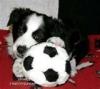leoniedarois - éleveur canin Dogzer