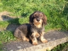 evoue26 - éleveur canin Dogzer