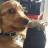 Merlin2003 - éleveur canin Dogzer