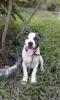 walix97 - éleveur canin Dogzer
