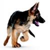 jah45 - éleveur canin Dogzer