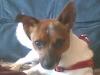 morgane-brault - éleveur canin Dogzer