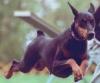 kiki490 - éleveur canin Dogzer